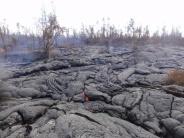 Lava above Pahoa town, January 2015
